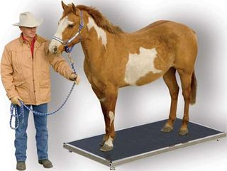 Horse_scale_sm